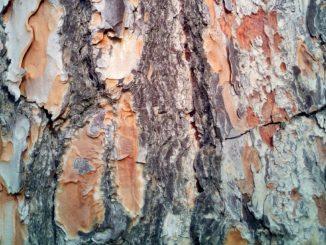 Zirbenholz, zirbenduftöl, Einrichtungsratgeber