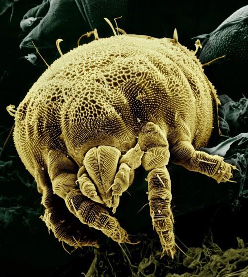 besser schlafen, Milben vermeiden