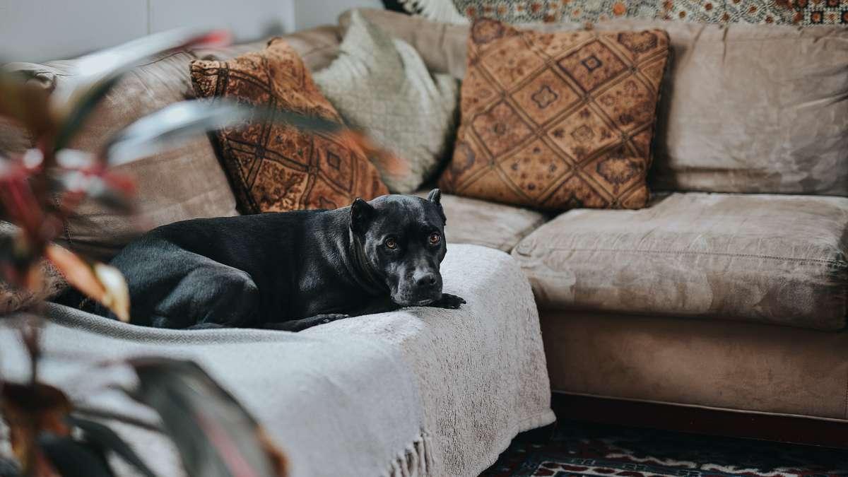 Polstermöbel reinigen, Sofa reinigen, Einrichtungsratgeber