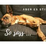 Hundegeruch entfernen, Sofa reinigen, moebel und design